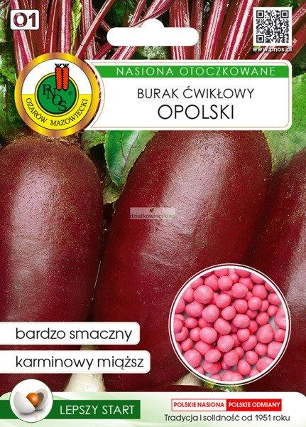 Burak Ćwikłowy Opolski (100 nasion)  - nasiona otoczkowane