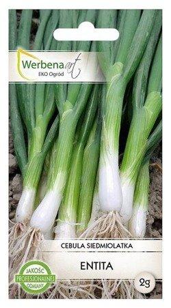 Cebula siedmiolatka Entita (Allium fistulosum L.) 2g
