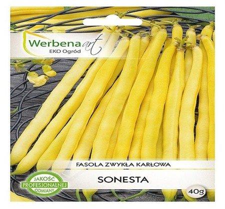 Fasola zwykła - karłowa Sonesta (Phaseolus vulgaris L.) 40g
