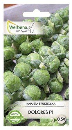 Kapusta brukselska Dolores F1 (Brassica oleracea L.) 0,5 g