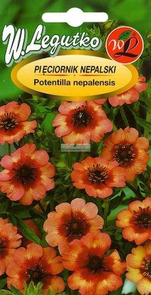 Pięciornik nepalski - różowy (0,1 g)