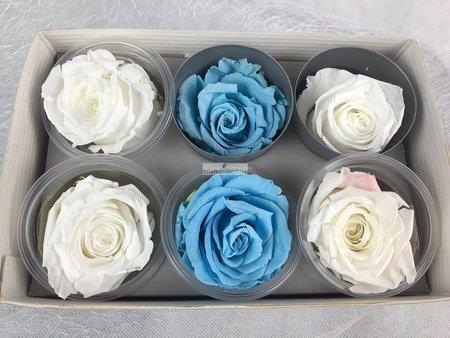 Róże wieczne (biało-niebieskie) 6 cm