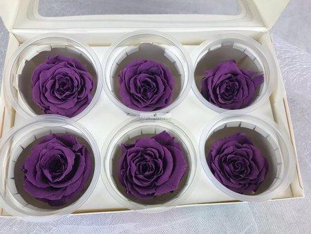 Róże wieczne (fioletowe) 5,5 cm