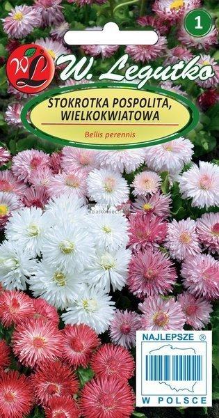 Stokrotka pospolita wielkokwiatowa - mieszanka (0,1 g)